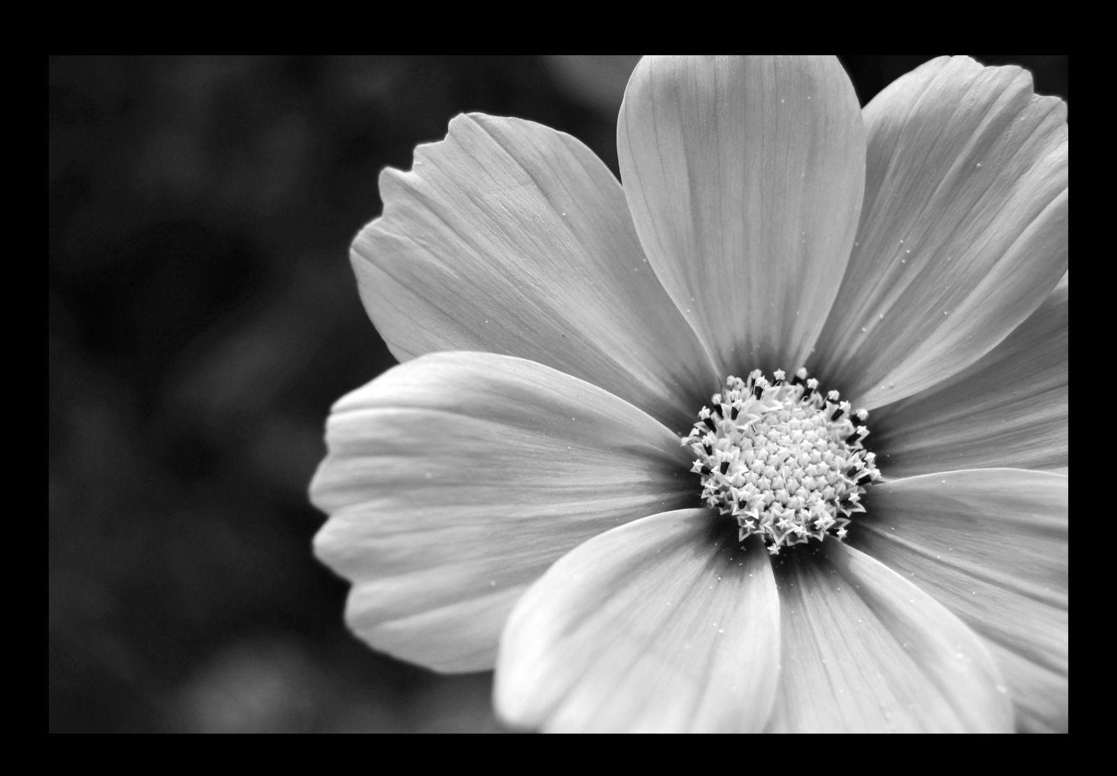images noir et blanc amour